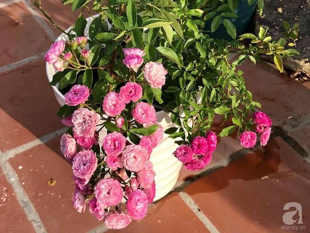 Sân thượng hoa hồng đẹp mộng mơ như trong cổ tích của cô giáo dạy Văn ở thành phố biển Nha Trang - Ảnh 41.