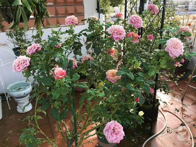 Sân thượng hoa hồng đẹp mộng mơ như trong cổ tích của cô giáo dạy Văn ở thành phố biển Nha Trang - Ảnh 7.