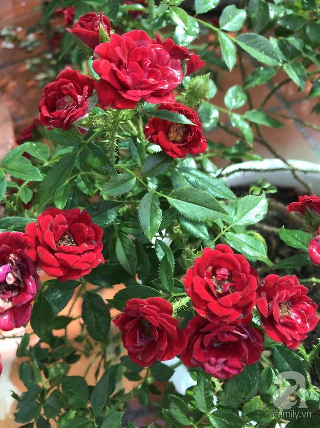 Sân thượng hoa hồng đẹp mộng mơ như trong cổ tích của cô giáo dạy Văn ở thành phố biển Nha Trang - Ảnh 8.