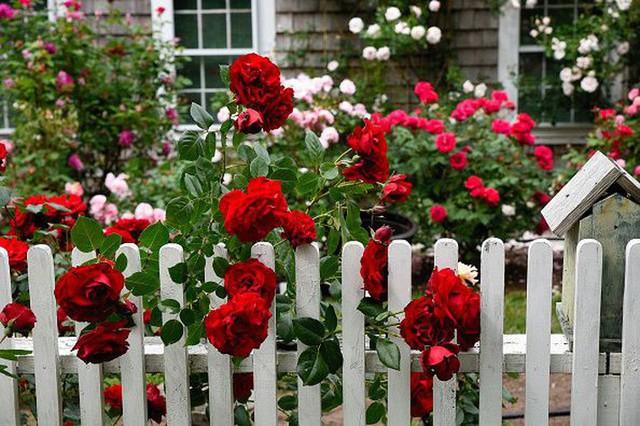 10 ý tưởng tạo hàng rào màu trắng lãng mạn cho ngôi nhà thêm ngọt ngào - Ảnh 7.