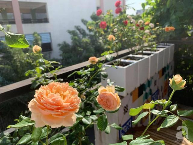 Ngôi nhà phố luôn ngát hương bởi 50 gốc hổng rực rỡ trên ban công ở Quận 1, Sài Gòn - Ảnh 12.