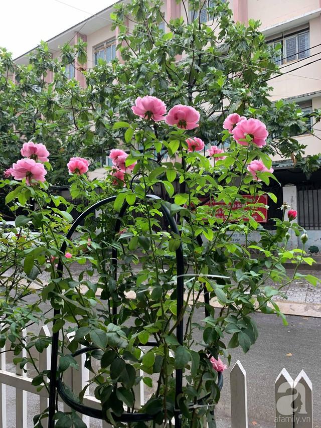 Ngôi nhà phố luôn ngát hương bởi 50 gốc hổng rực rỡ trên ban công ở Quận 1, Sài Gòn - Ảnh 15.