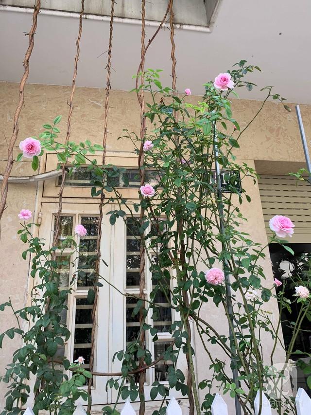 Ngôi nhà phố luôn ngát hương bởi 50 gốc hổng rực rỡ trên ban công ở Quận 1, Sài Gòn - Ảnh 17.