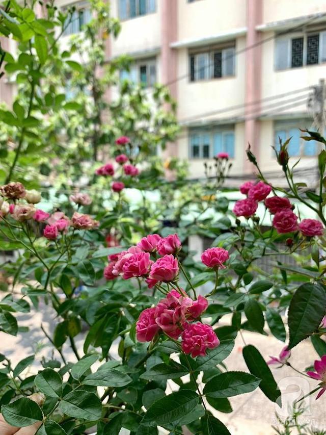 Ngôi nhà phố luôn ngát hương bởi 50 gốc hổng rực rỡ trên ban công ở Quận 1, Sài Gòn - Ảnh 26.