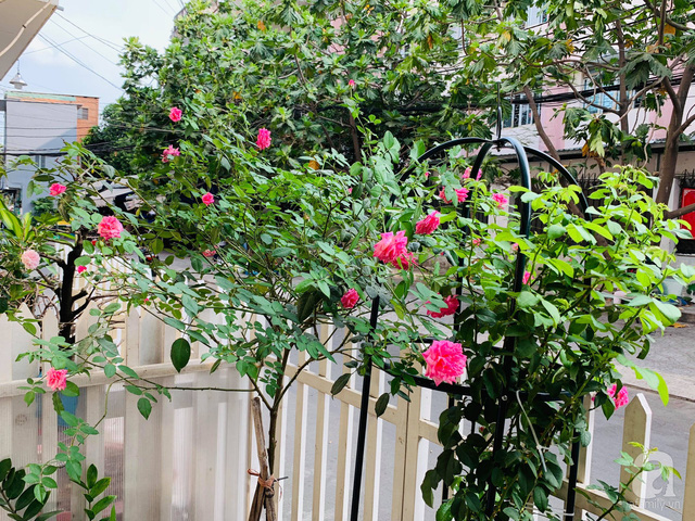 Ngôi nhà phố luôn ngát hương bởi 50 gốc hổng rực rỡ trên ban công ở Quận 1, Sài Gòn - Ảnh 6.