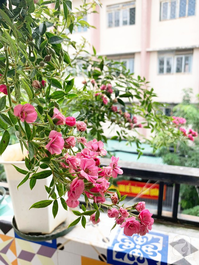 Ngôi nhà phố luôn ngát hương bởi 50 gốc hổng rực rỡ trên ban công ở Quận 1, Sài Gòn - Ảnh 10.