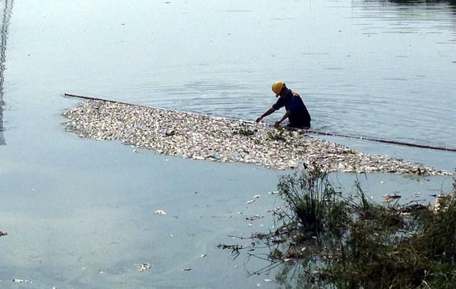 Hà Nội: Nguyên nhân khiến cá chết hàng loạt ở hồ điều hòa Yên Sở - Ảnh 1.