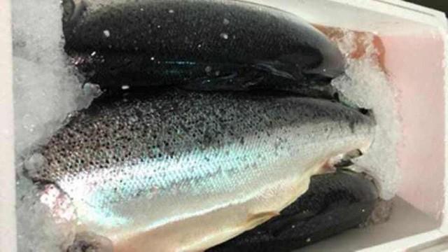 Tiến hành thu hồi cá hồi Na Uy vì nhiễm vi khuẩn gây tiêu chảy - Ảnh 1.