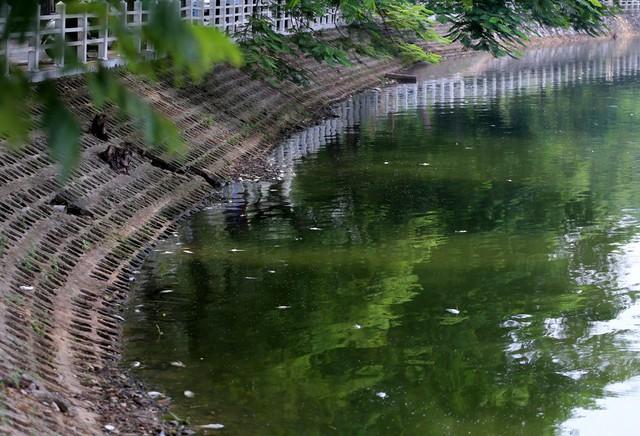 Hồ Trúc Bạch - Hà Nội bất ngờ xuất hiện tình trạng cá chết hàng loạt - Ảnh 9.
