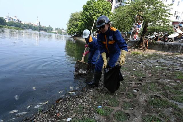 Hồ Trúc Bạch - Hà Nội bất ngờ xuất hiện tình trạng cá chết hàng loạt - Ảnh 12.