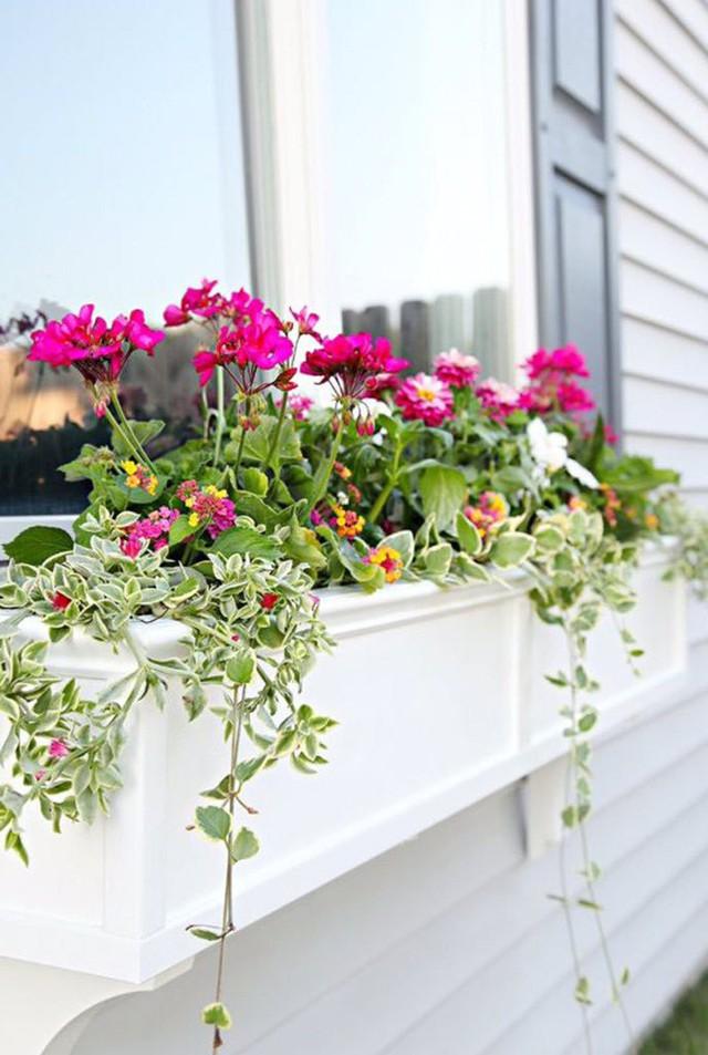 Không gian sống đẹp chất ngất nhờ những chiếc hộp trồng cây tự làm gắn cửa sổ - Ảnh 7.