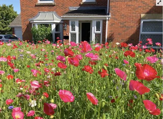 Người đàn ông biến bãi cỏ trước nhà thành cánh đồng hoa  - Ảnh 1.