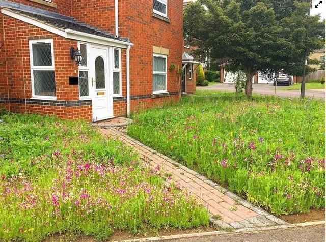 Người đàn ông biến bãi cỏ trước nhà thành cánh đồng hoa  - Ảnh 3.