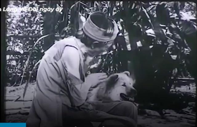 Vì sao chú chó Shiba được lựa chọn vào vai nhân vật ám ảnh nhiều thế hệ học sinh Việt Nam? - Ảnh 1.