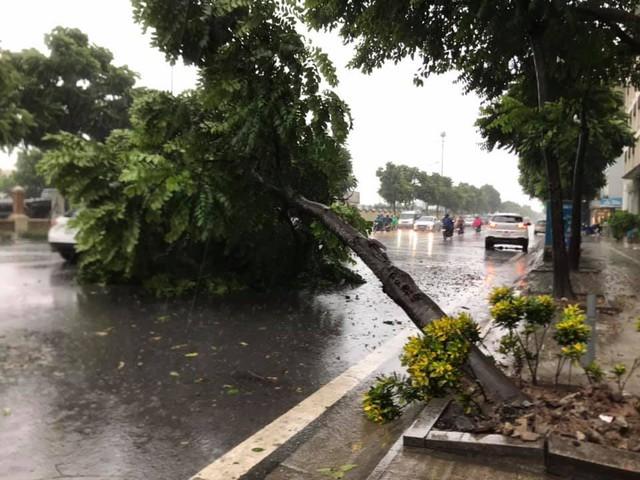 Gió giật mạnh, nhiều điểm ngập sâu, cây đổ tràn lan ở Hà Nội do ảnh hưởng mưa bão - Ảnh 12.