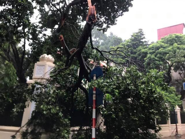Gió giật mạnh, nhiều điểm ngập sâu, cây đổ tràn lan ở Hà Nội do ảnh hưởng mưa bão - Ảnh 11.