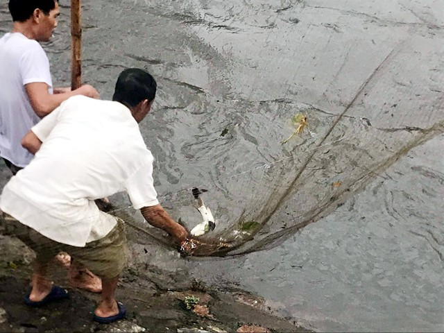 Sau mưa ngập, người Thủ đô hào hứng bắt hàng tấn cá dưới sông Kim Ngưu - Ảnh 3.