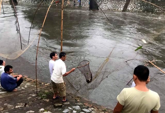 Sau mưa ngập, người Thủ đô hào hứng bắt hàng tấn cá dưới sông Kim Ngưu - Ảnh 4.