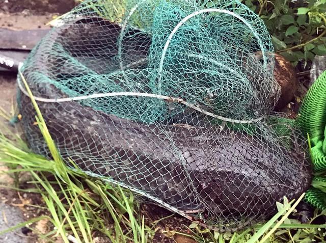Sau mưa ngập, người Thủ đô hào hứng bắt hàng tấn cá dưới sông Kim Ngưu - Ảnh 7.