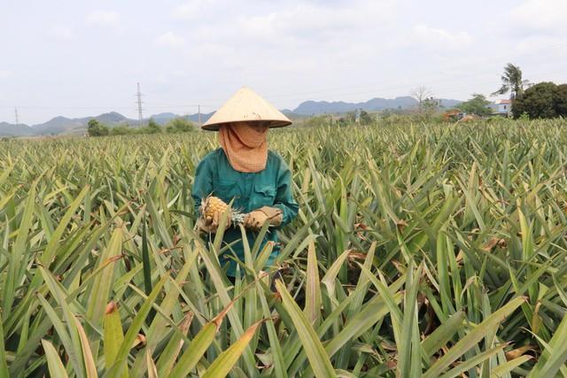 Bất cập trong sử dụng đất tại các nông, lâm trường xứ Thanh: Lãng phí tài nguyên, đi ngược kỳ vọng - Ảnh 1.
