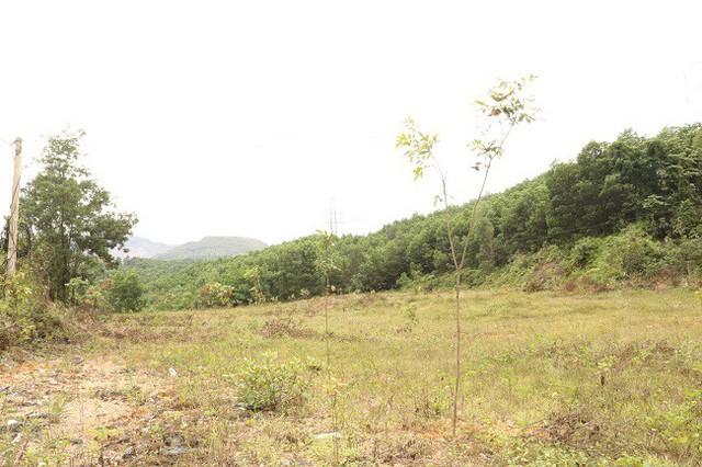 Phù phép cây lâu năm trong đất dự án, người dân thu lợi bất chính hàng chục tỷ đồng  - Ảnh 2.