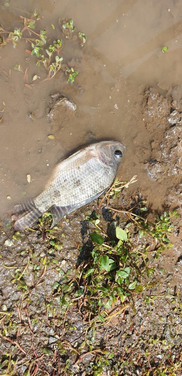 Sau bão số 3, sông Tô Lịch trong xanh nhưng nhiều rác trên bề mặt - Ảnh 10.