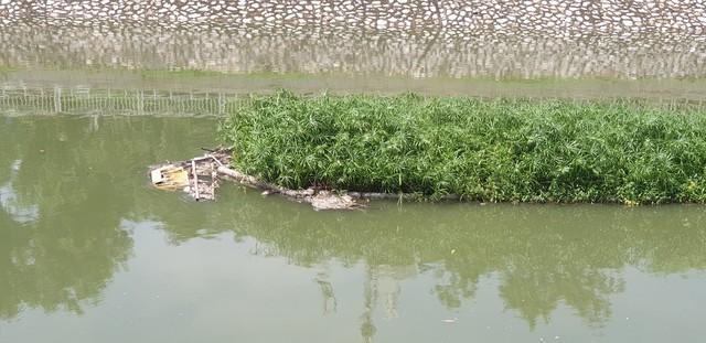 Sau bão số 3, sông Tô Lịch trong xanh nhưng nhiều rác trên bề mặt - Ảnh 4.