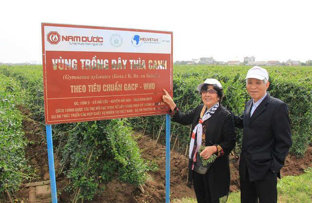 Đột phá mới từ nghiên cứu tác dụng hạ đường huyết của Dây thìa canh Việt Nam - Ảnh 1.