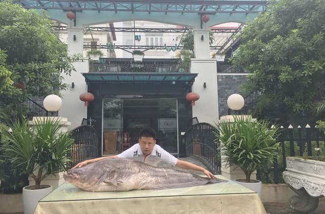 """Phát hoảng cá leo """"to chưa từng thấy"""" xuất hiện ở vùng đất Kinh Bắc - Ảnh 1."""