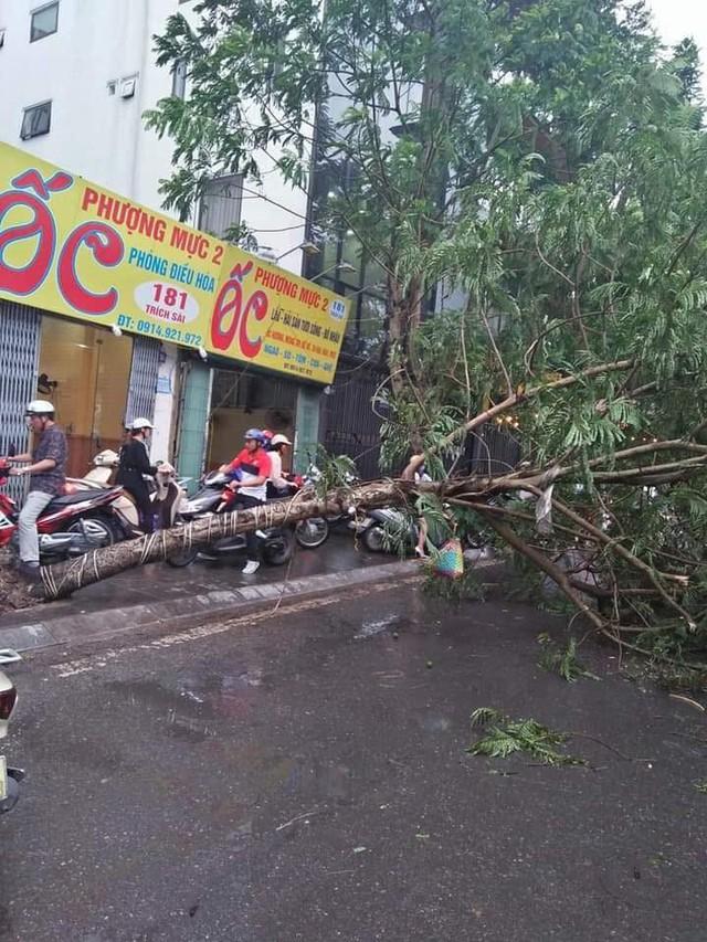 Kinh hoàng cây đổ gây chết người ở Hà Nội nhưng đây lại không phải là lần đầu tiên - Ảnh 3.