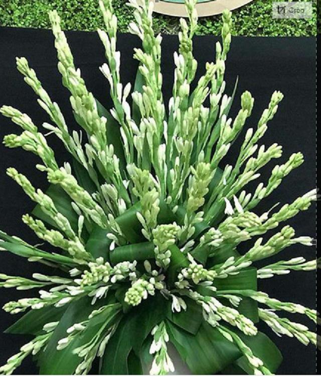 Những loài hoa tài lộc, may mắn đắt hàng nhất mùa Vu lan - Ảnh 4.