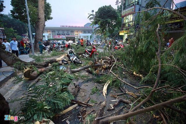 Kinh hoàng cây đổ gây chết người ở Hà Nội nhưng đây lại không phải là lần đầu tiên - Ảnh 4.