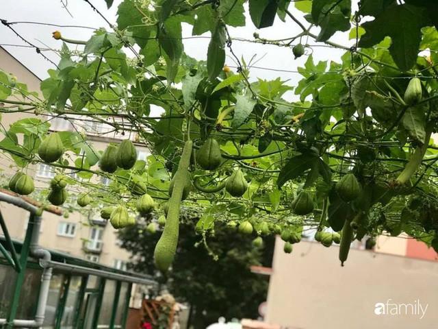 Mẹ đảm ở Czech cải tạo sân bê tông thành khu vườn với bạt ngàn rau củ quả Việt tươi tốt - Ảnh 1.