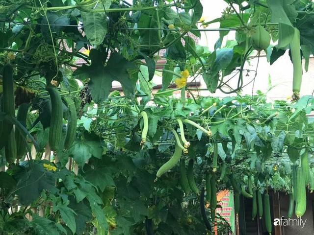 Mẹ đảm ở Czech cải tạo sân bê tông thành khu vườn với bạt ngàn rau củ quả Việt tươi tốt - Ảnh 2.