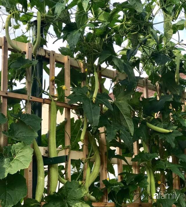 Mẹ đảm ở Czech cải tạo sân bê tông thành khu vườn với bạt ngàn rau củ quả Việt tươi tốt - Ảnh 12.