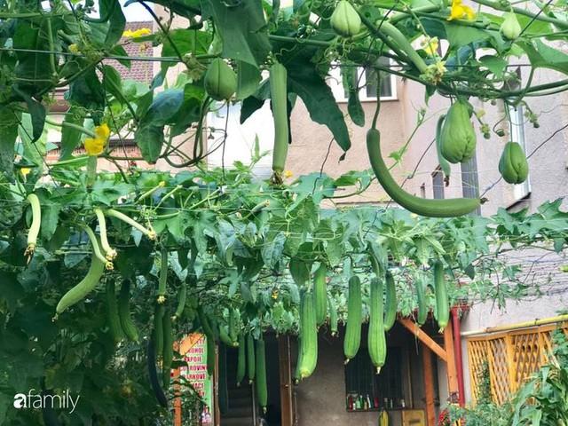 Mẹ đảm ở Czech cải tạo sân bê tông thành khu vườn với bạt ngàn rau củ quả Việt tươi tốt - Ảnh 14.