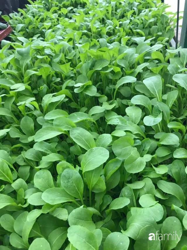 Mẹ đảm ở Czech cải tạo sân bê tông thành khu vườn với bạt ngàn rau củ quả Việt tươi tốt - Ảnh 21.