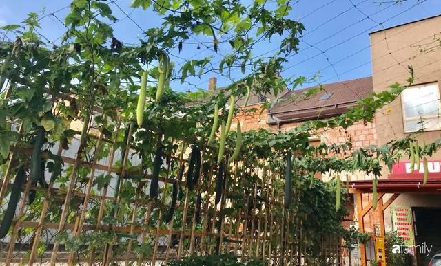 Mẹ đảm ở Czech cải tạo sân bê tông thành khu vườn với bạt ngàn rau củ quả Việt tươi tốt - Ảnh 24.