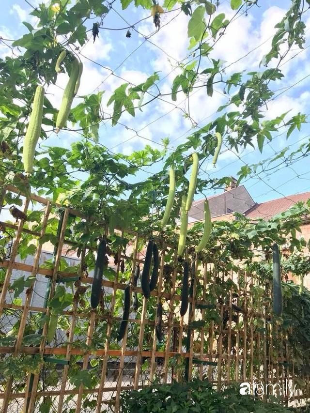 Mẹ đảm ở Czech cải tạo sân bê tông thành khu vườn với bạt ngàn rau củ quả Việt tươi tốt - Ảnh 25.