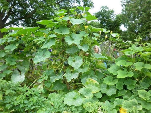 Khu vườn trồng đủ loại rau củ quả khổng lồ của ông bà lão yêu thích làm vườn sau khi nghỉ hưu - Ảnh 1.
