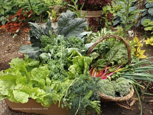 Khu vườn trồng đủ loại rau củ quả khổng lồ của ông bà lão yêu thích làm vườn sau khi nghỉ hưu - Ảnh 11.