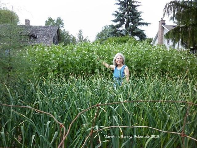 Khu vườn trồng đủ loại rau củ quả khổng lồ của ông bà lão yêu thích làm vườn sau khi nghỉ hưu - Ảnh 12.