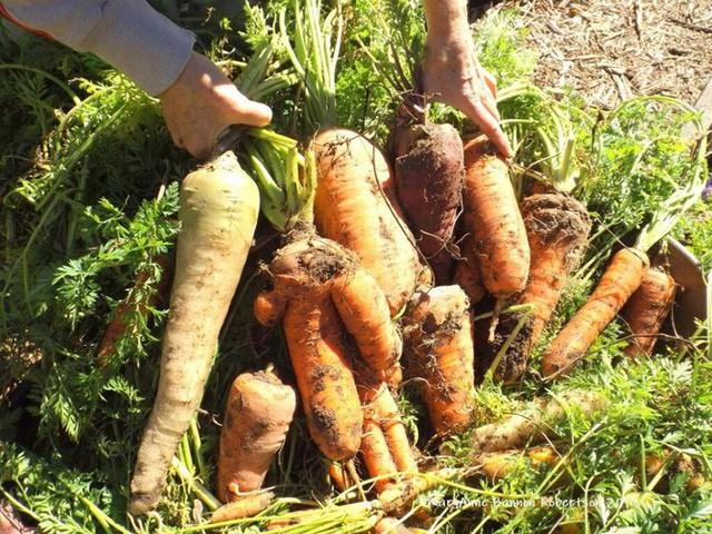 Khu vườn trồng đủ loại rau củ quả khổng lồ của ông bà lão yêu thích làm vườn sau khi nghỉ hưu - Ảnh 14.