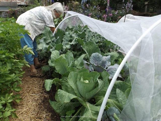 Khu vườn trồng đủ loại rau củ quả khổng lồ của ông bà lão yêu thích làm vườn sau khi nghỉ hưu - Ảnh 15.