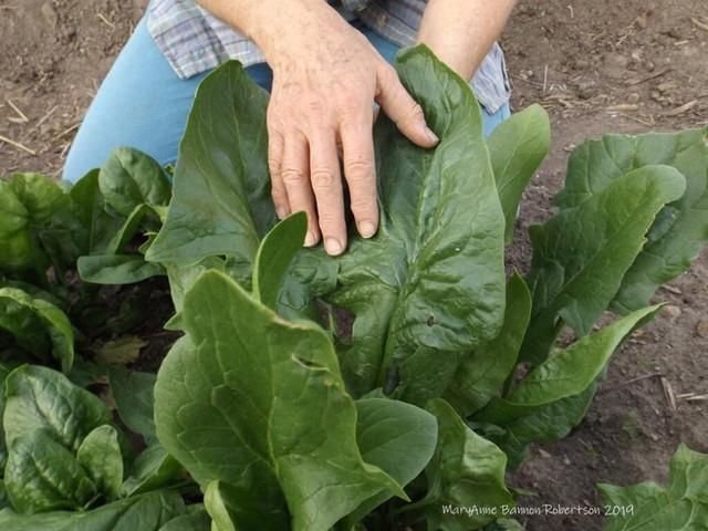 Khu vườn trồng đủ loại rau củ quả khổng lồ của ông bà lão yêu thích làm vườn sau khi nghỉ hưu - Ảnh 16.