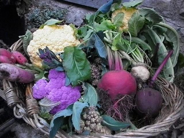 Khu vườn trồng đủ loại rau củ quả khổng lồ của ông bà lão yêu thích làm vườn sau khi nghỉ hưu - Ảnh 18.