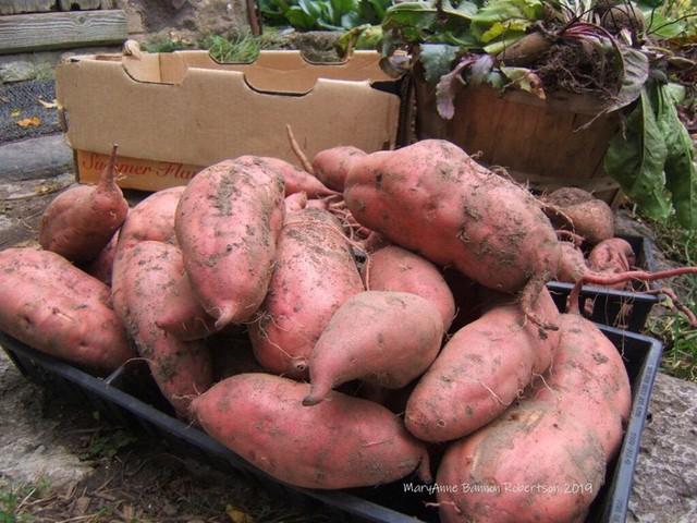 Khu vườn trồng đủ loại rau củ quả khổng lồ của ông bà lão yêu thích làm vườn sau khi nghỉ hưu - Ảnh 19.