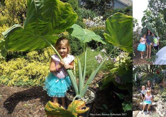 Khu vườn trồng đủ loại rau củ quả khổng lồ của ông bà lão yêu thích làm vườn sau khi nghỉ hưu - Ảnh 21.
