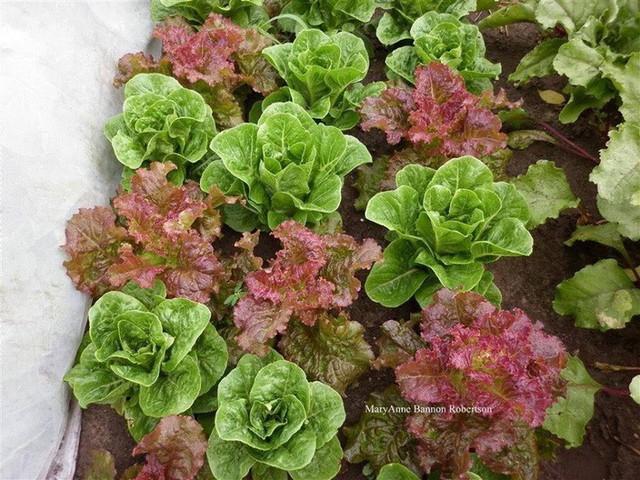 Khu vườn trồng đủ loại rau củ quả khổng lồ của ông bà lão yêu thích làm vườn sau khi nghỉ hưu - Ảnh 22.