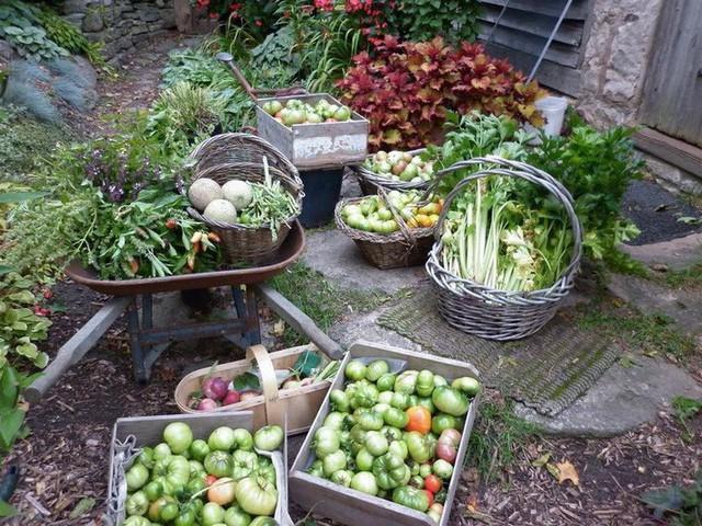 Khu vườn trồng đủ loại rau củ quả khổng lồ của ông bà lão yêu thích làm vườn sau khi nghỉ hưu - Ảnh 23.